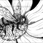 Bumble Bee with Pen & Ink